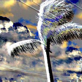 by Austin Lubetkin - Digital Art Places