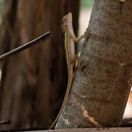 Gecko by Hiran Sasidharan - Animals Reptiles ( gecko, everyday, backyard, reptile, small, garden )