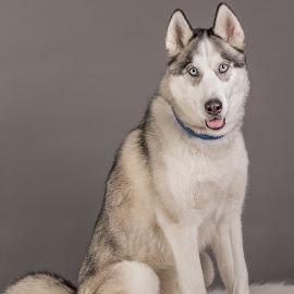 by Myra Brizendine Wilson - Animals - Dogs Portraits ( canine, foster dog, dogs, pet, pets, gcspca, dog, foster aspen, aspen )
