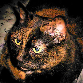 Pepper The Ruler of the house by Sharon Leora Norris - Animals - Cats Portraits