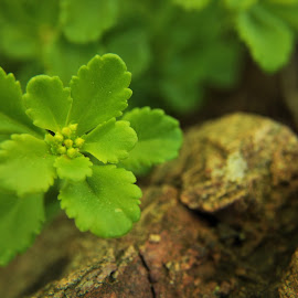 by Amy Sauer - Nature Up Close Other plants