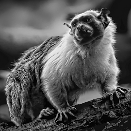 by Doreen Rutherford - Black & White Animals