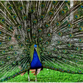 by Doreen L - Animals Birds (  )
