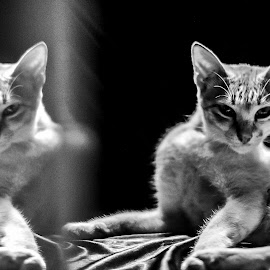 Divergent by Shiela Ma Moj - Animals - Cats Portraits ( #cats #photography #firsttime #blacknwhite,  )