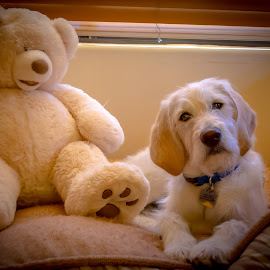 Augie and his friend by Spence Fairbanks - Animals Other