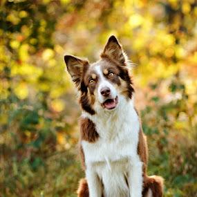 *** by Lukáš Lang - Animals - Dogs Portraits (  )