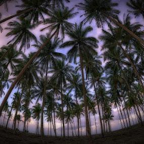 Palm Garden II by Alexlky KT - Landscapes Travel