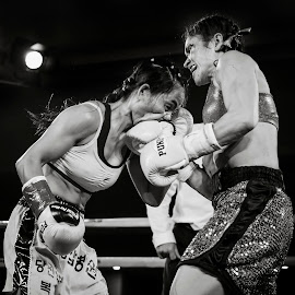 Chick Fight by Kim Johnson - Sports & Fitness Boxing ( punch, hit, fight, female, boxer, combat, boxing )
