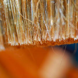 Bristles by Pamela NavarraWilliams-Shane - Artistic Objects Other Objects ( orange, bristles, paint brush, blue, selective focus, close up )