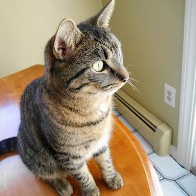 Mesmerized by Liz Pascal - Animals - Cats Portraits (  )