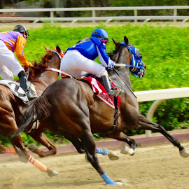 Female Jockey by Adlah Donastorg - Sports & Fitness Other Sports ( horse racing )