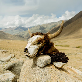 Death by Rishabh Asthana - Landscapes Travel ( mountains, goat, carcass, india, ladakh, landscape, head )