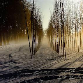 by Maarten Van de Voort - Landscapes Weather