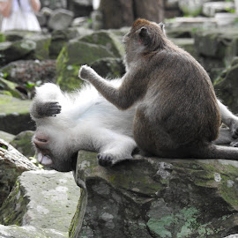 Grooming time by Di Mc - Novices Only Wildlife ( grooming, cleaning, monkeys, groom, monkey )