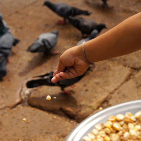 Feeding the Pigeon by Afzal Khan - People Body Parts ( child, pigeon, corns, hands, dropping, food, grain, feeding, maize., pwchands )