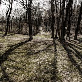 Shadows Cast by Jerry Keefer - City,  Street & Park  City Parks ( lebanon, union canal park, shadows )