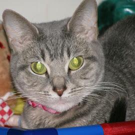 Miss Brandi Green  by Talitha Sydnei'a - Animals - Cats Portraits
