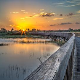 Boardwalk to the Sun by Tim Hancock - Landscapes Sunsets & Sunrises ( water, nature, sunset, everglades, boardwalk )