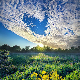 Small Spaces In Between by Phil Koch - Landscapes Prairies, Meadows & Fields ( natural light, vertical, wisconsin, ray, yellow, leaves, phil koch, landscape, spring, photography, sun, sky, nature, tree, autumn, perspective, horizons, flowers, light, office, clouds, orange, park, green, art, twilight, agriculture, horizon, scenic, morning, portrait, shadows, field, dawn, red, blue, serene, amber, sunset, peace, meadow, summer, trees, lines, beam, sunrise, garden )