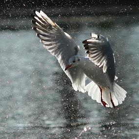 by Jean-Luc Méloux - Animals Birds