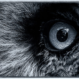 All Seeing Eye by Barry Smith - Abstract Macro ( abstract, nature, owl, nature up close, feathers,  )