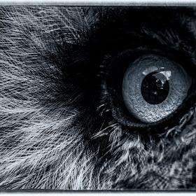 owls eye abstract.jpg