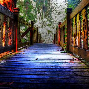 by Cikgu Kioka - Landscapes Forests
