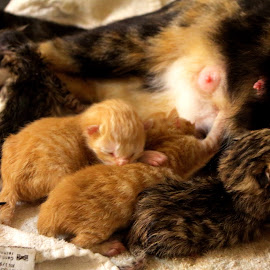 New Life by Maranda Moore - Animals - Cats Kittens