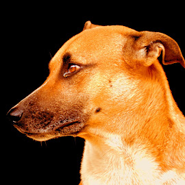 Johnny by SANGEETA MENA  - Animals - Dogs Portraits