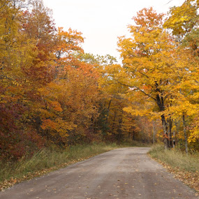 Skyline Drive by Alison Gimpel - Landscapes Travel ( minnesota, fall leaves, fall colors, autumn, landscapes,  )