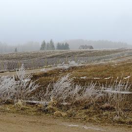 Frost by Mārīte Ramša - Landscapes Weather