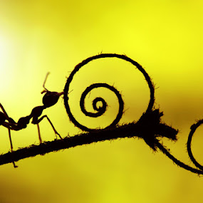 by Dwi Sudarmawan - Animals Insects & Spiders ( macro, ant,  )