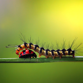 o~ by Nordin Seruyan - Animals Insects & Spiders