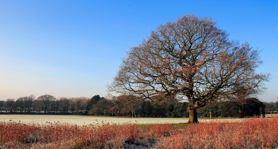 Winter Tree by Tracey Dolan - Landscapes Prairies, Meadows & Fields ( field, winter, sky, tree, grass, blue., frost, alone )