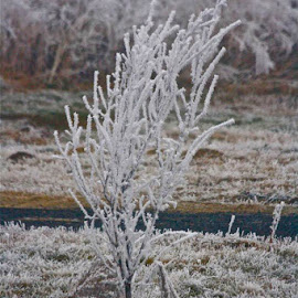 Frost  by Irina Walker - Landscapes Weather