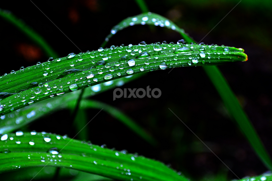 by Mayank Shrivastava - Nature Up Close Leaves & Grasses