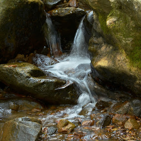 Trickling Down by June Morris - Nature Up Close Rock & Stone ( water, nature, down, trickling, water fall, photography, up, close )