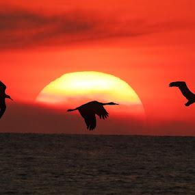 by Giada Reccardini - Landscapes Sunsets & Sunrises ( pwcmovinganimals )