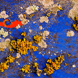 Touch of Red by Kittie Groenewald - Abstract Patterns ( abstract, contrasts, colours, lichen )