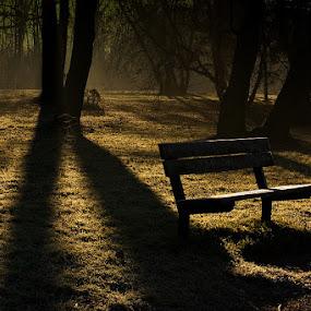 Forsaken bench by Miroslav Socha - City,  Street & Park  City Parks (  )