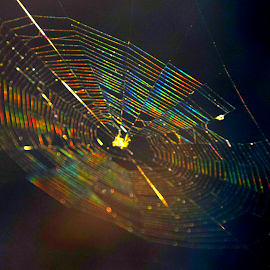 Spider web by Jamie Cunningham - Nature Up Close Webs