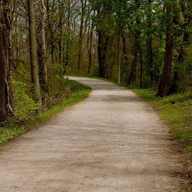 Beaver Marsh by Lynn Andrasko - City,  Street & Park  City Parks