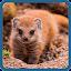 Game Угадай животное APK for Windows Phone