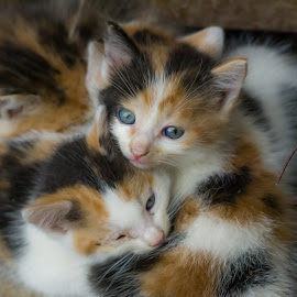 Our new kittens by Rombe Kasňa - Animals - Cats Kittens ( cats, kitten, kittens, cute, young )