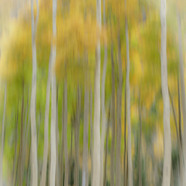 Trees at Mt. Princeton by Gwen Paton - Abstract Patterns ( aspen trees, yellow, abstract, colorado, golden trees,  )