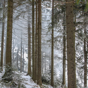 Winter in the Forest by Britta Rogge - Landscapes Forests ( forests, winter, nature, landscape photography, forest, landscape )