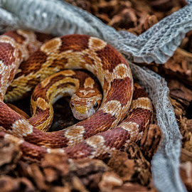 Dark change by Lissette Giron - Animals Reptiles