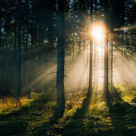 Near Sunset by Jerry Kambeitz - Landscapes Forests ( grasses, sunset, trees, forest, light )