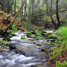 Little river by Gil Reis - Landscapes Waterscapes ( forests, water, life, bio, nature, portugal, rivers )