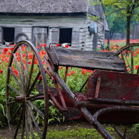 Antique Wagon by Judy Rosanno - Transportation Other ( poppy field, barn, texas, wagon, castroville, antique wagon, antique, rural,  )